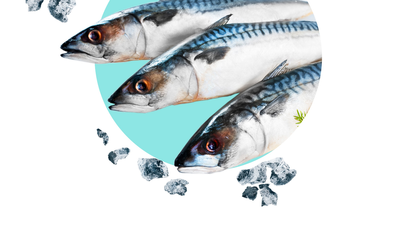 Mackerel: Is it Good for Your Health?